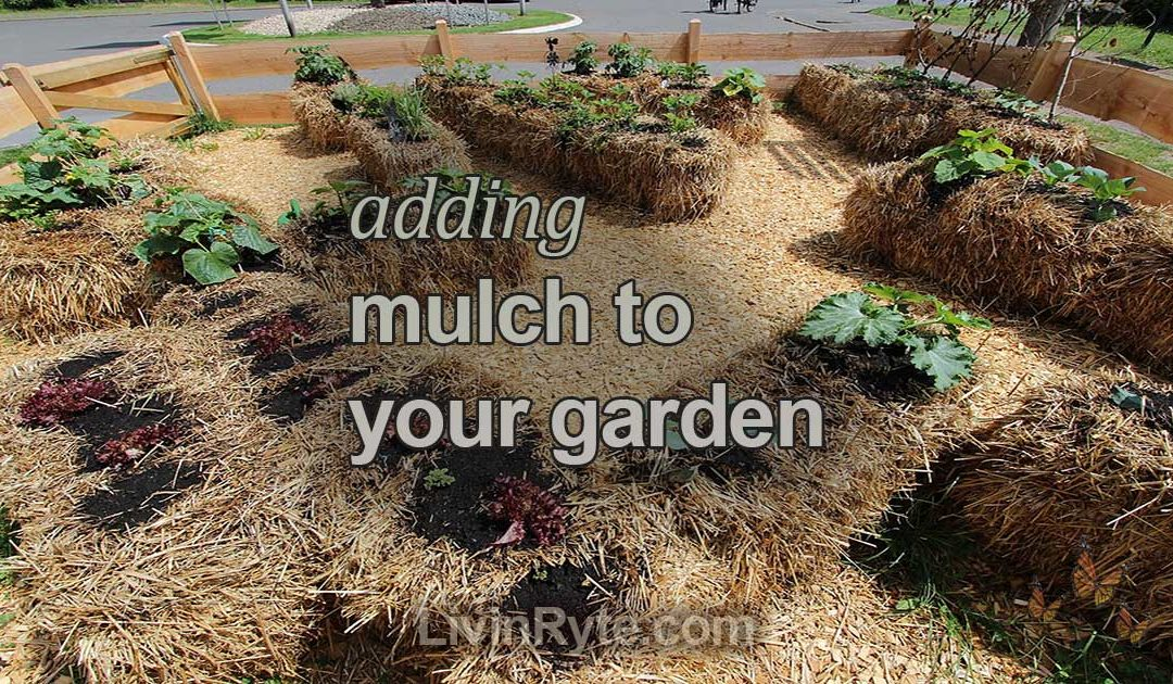 Adding Mulch - Straw